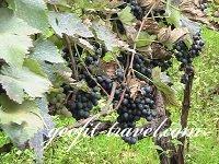 Circuits vinicoles en Géorgie