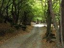 Tour to the Green monastery