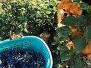 """Weinverkostung in Napareuli """"Haus der Zwillingen"""""""